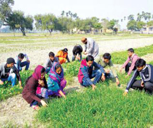 Working opportunities for agriculturists